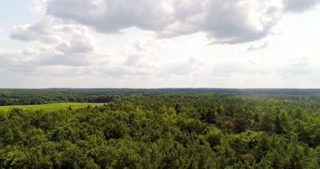 Aerial-View-Of-Forest-In-Summer-1